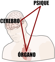 psique-cerebro-organo
